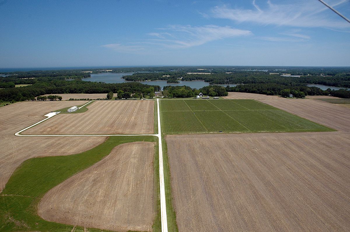 Chatham Vineyards - Aerial View
