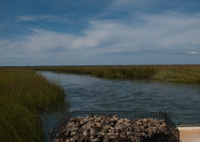 Shooting-Point-Oysters-Hog-Island-Bay-VA-0052
