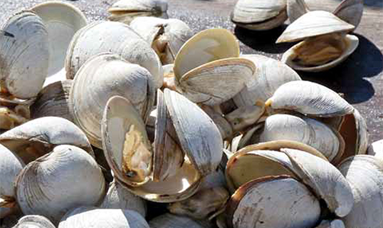 Steamed Clams in White Wine and Garlic Butter